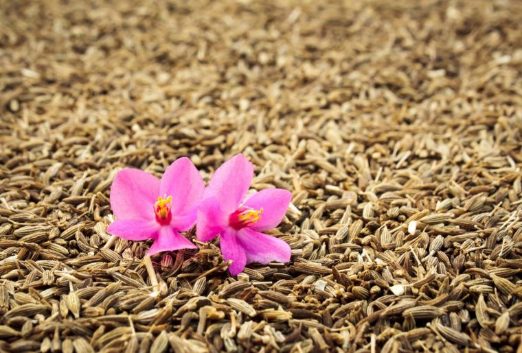Cumin seeds and orchid flower
