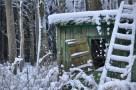 winter07colorWEB