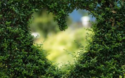 Heart Imagery©: Healing and Emotional Clarity -Teacher Training, Toronto