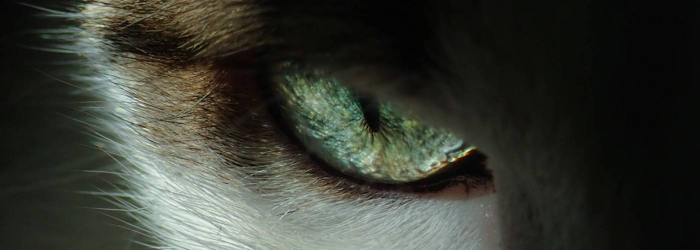 close up photo of cat s eye