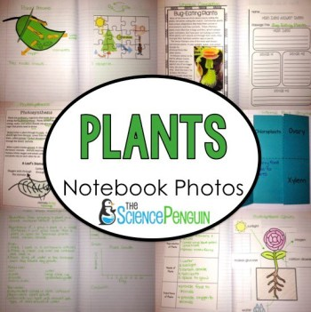 Plants Notebooks Photos