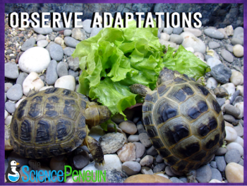 Observe animals in the classroom to learn about their adaptations