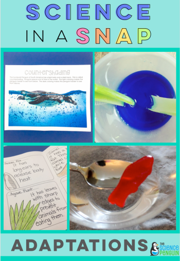 Adaptations in a Snap: Students learn about plant and animal adaptations through hands-on activities!