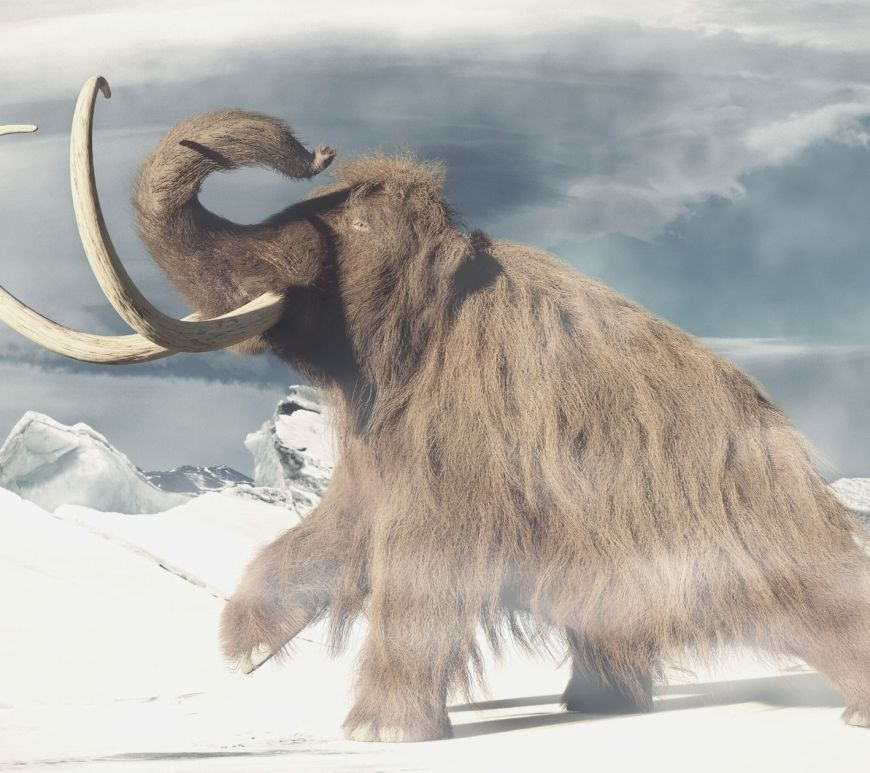 Woolly mammoth - The Scientific Triangle