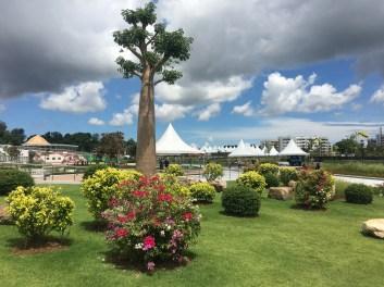 Baobab trees were imported from Australia for Taman Mahkota Jubli Emas. Photo: Rudolf Portillo