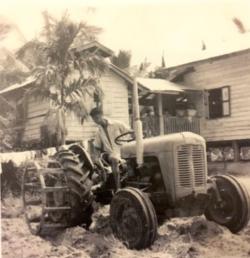 In the 1950s, Lau Ah Kok borrowed $10,000 from the government to buy machinery for his Manggis farm. Photo: Courtesy of the Lau Family
