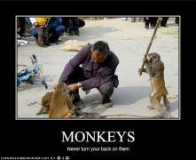 funny-monkeys