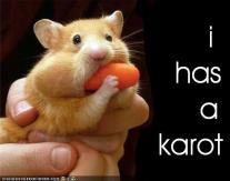 I has a karot
