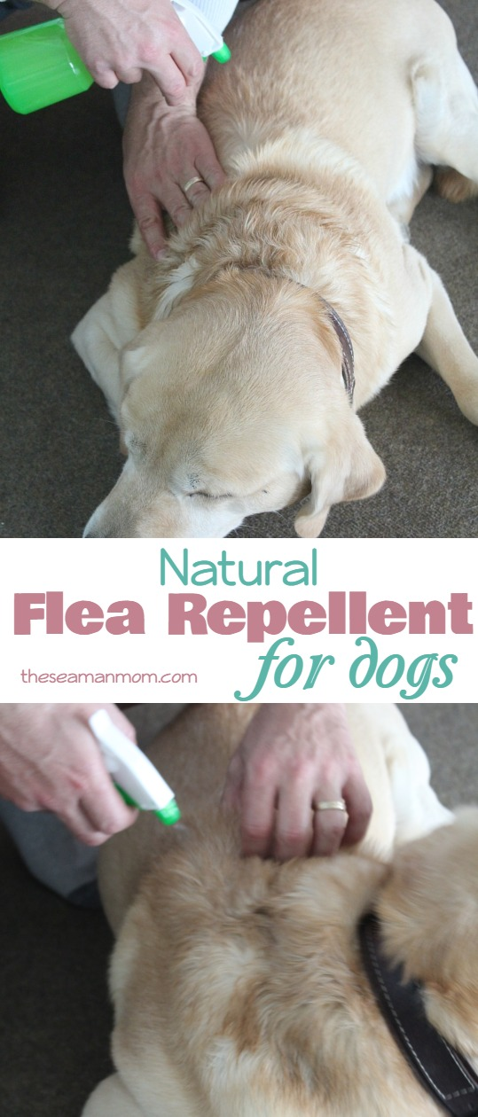 Natural flea repellent for dogs