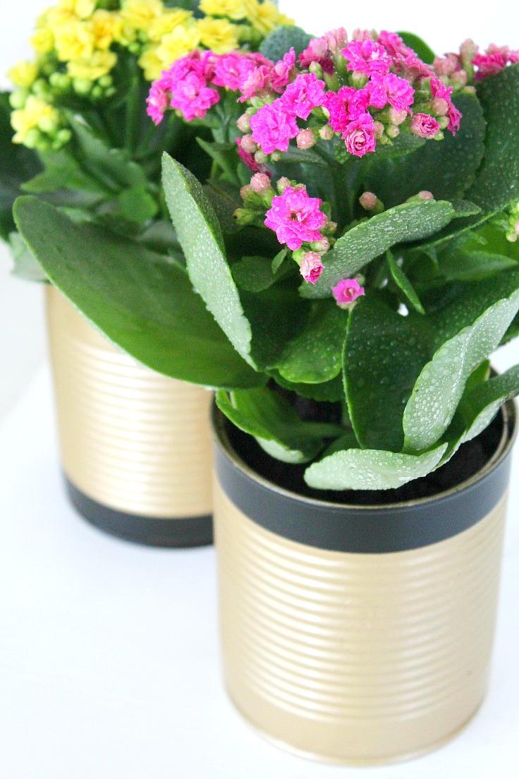 Tin can flower pots