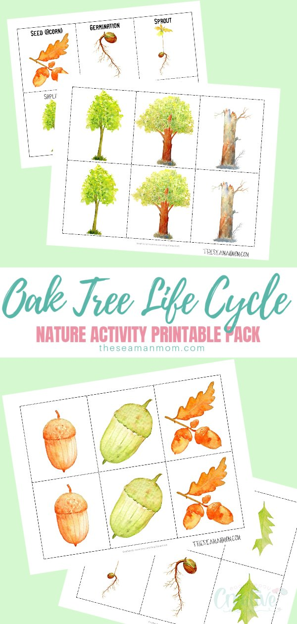 Are you looking for nature activities to do with the kids in fall? Help kids learn about the oak tree life cycle in a fun way with this lovely printable pack that has two sets of cards: sequencing cards and a memory game! via @petroneagu