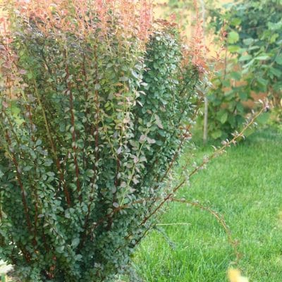 Fall gardening tips to get the yard ready for winter