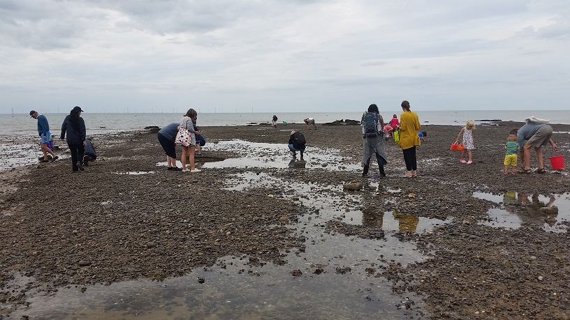 children and adults look for fossils at low tide