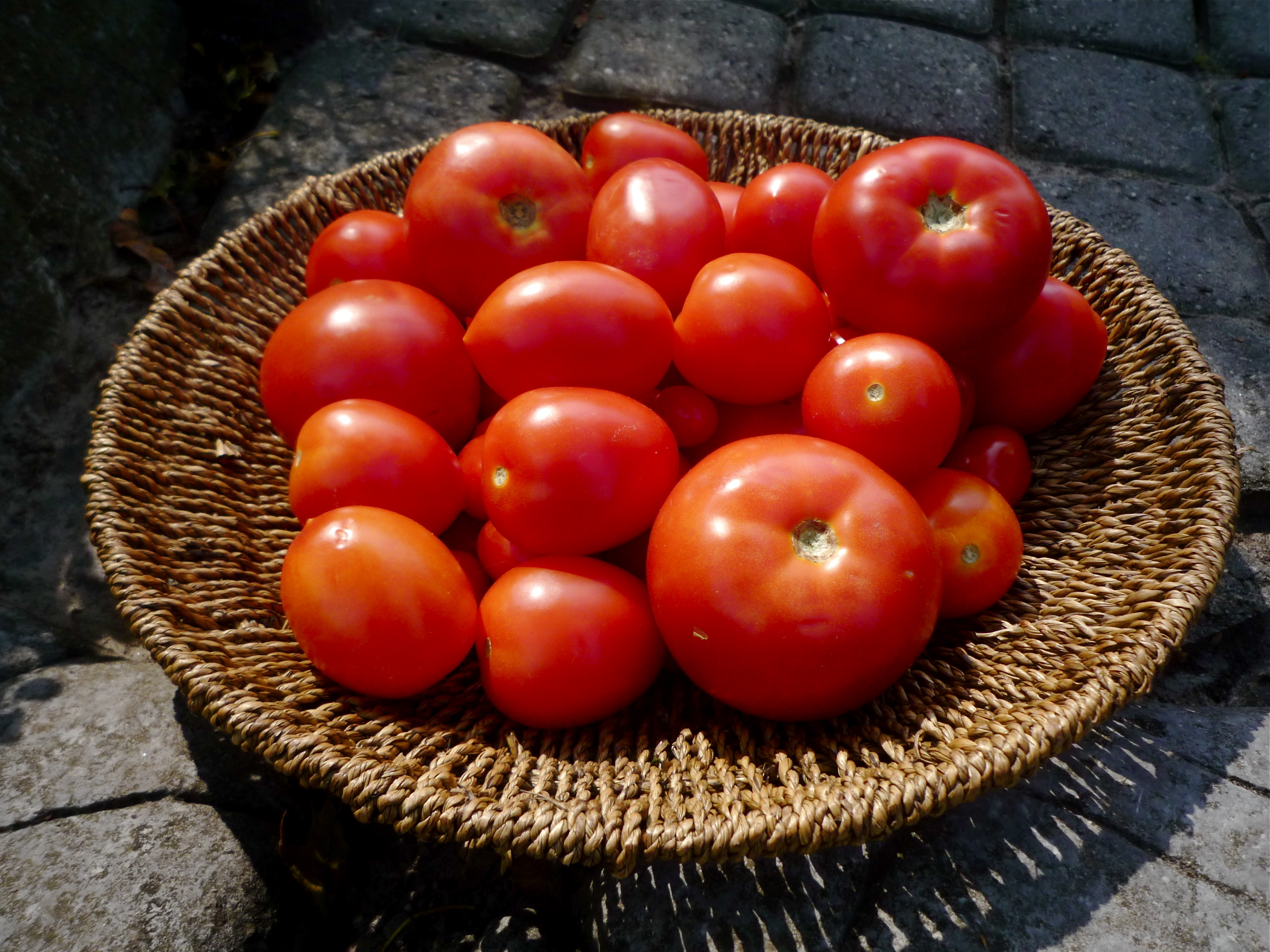 A basket of tomatoes, September 2009