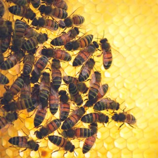 Beekeeping – A Spring Beehive Inspection