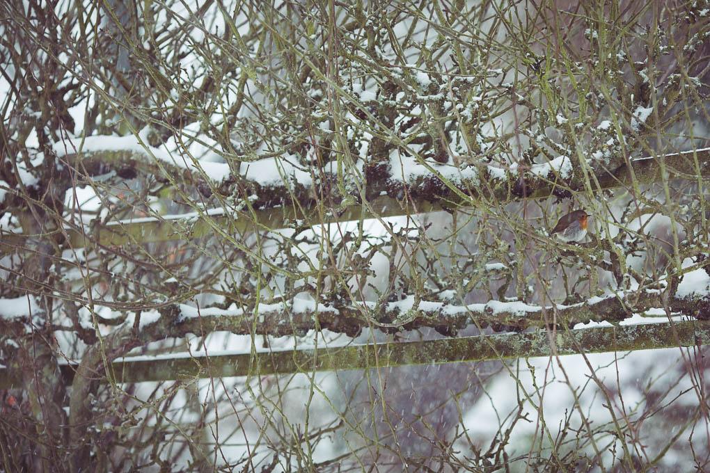 Blackcurrant and Bay Leaf Jam -- Robin in snow -- Seasonal Food UK -- Seasonal Recipes UK | https://theseasonaltable.co.uk/sweet/blackcurrant-and-bay-leaf-jam/