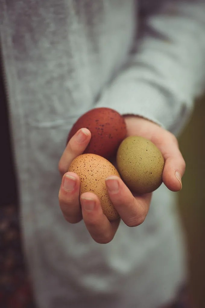 Chickens - Creating a Dual Purpose UK Easter Egger Flock – Part 1 -- Speckled olive egg and Marans egg   https://theseasonaltable.co.uk/smallholding/chickens-creating-a-dual-purpose-uk-easter-egger-flock-part-1