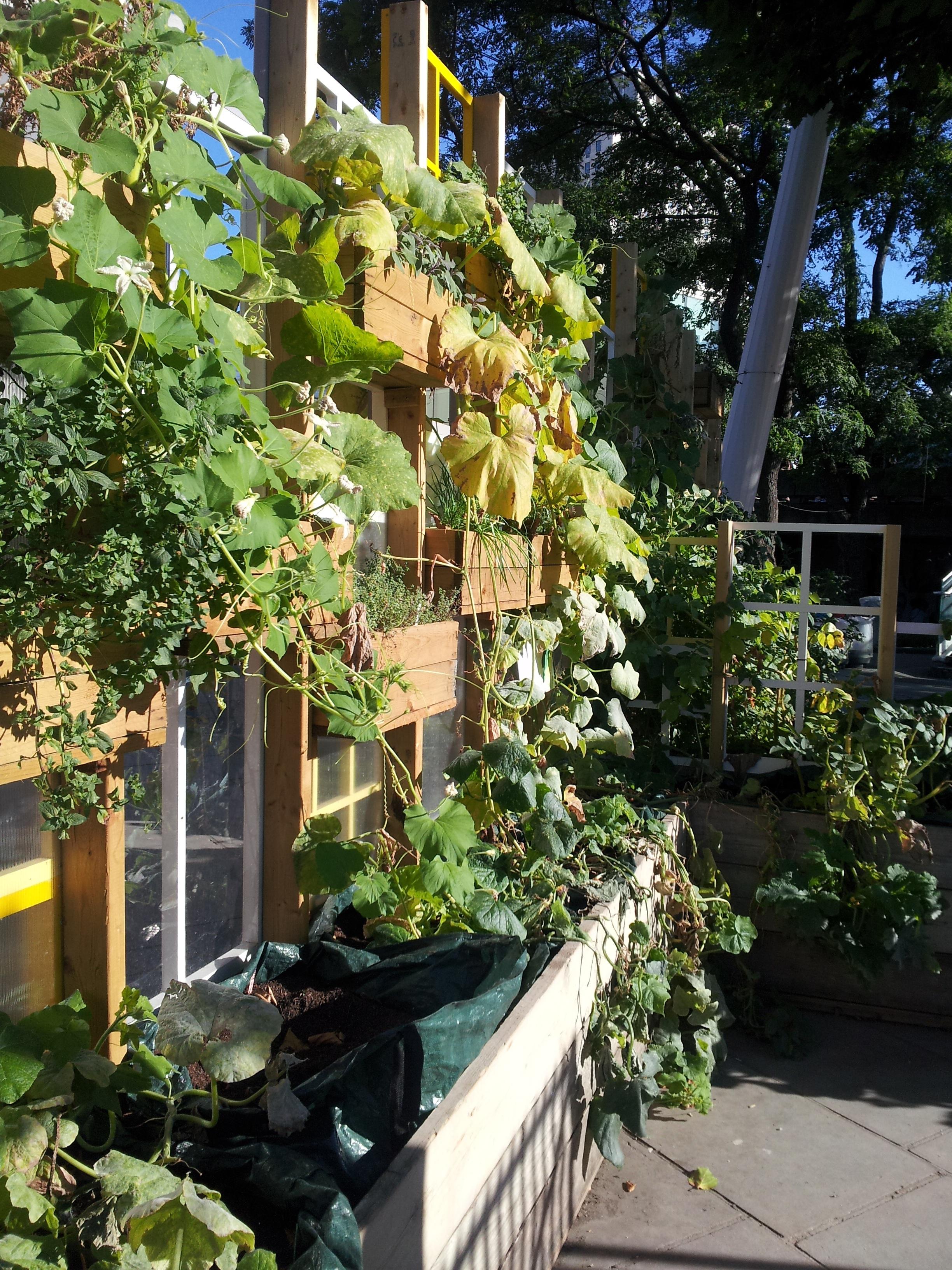 Queen S Walk Window Gardens London Uk The Secret