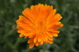 Wild flowers £1.99 each