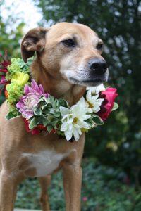 Monty loves flowers too