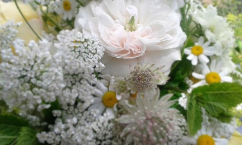 Rosa Madame Hardy, Early Summer Bouquet