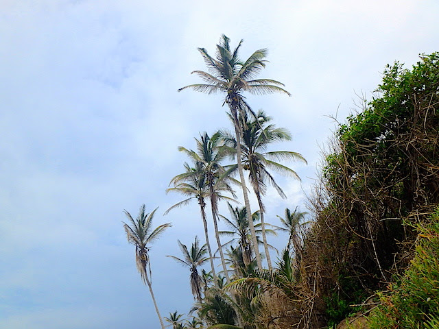 Palm tress in El Cabo beach in Tayrona National Park, Colombia