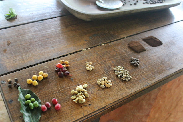 Coffee farm visit at the Plantation House in Salento, Colombia