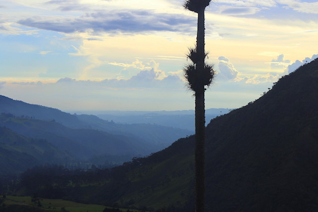 Hiking the Cocora Valley, Salento, Colombia