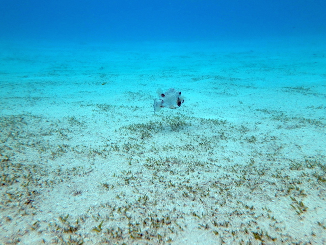Snorkeling in Tobago Cays