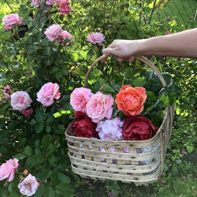 Picking fresh flowers in the countryside