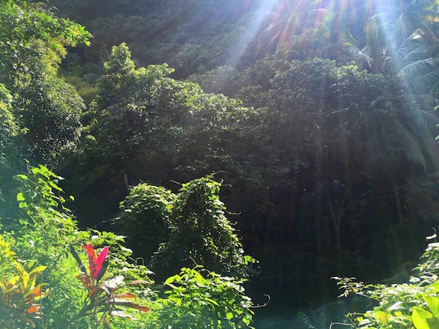 Luxuriant jungle in St. Lucia
