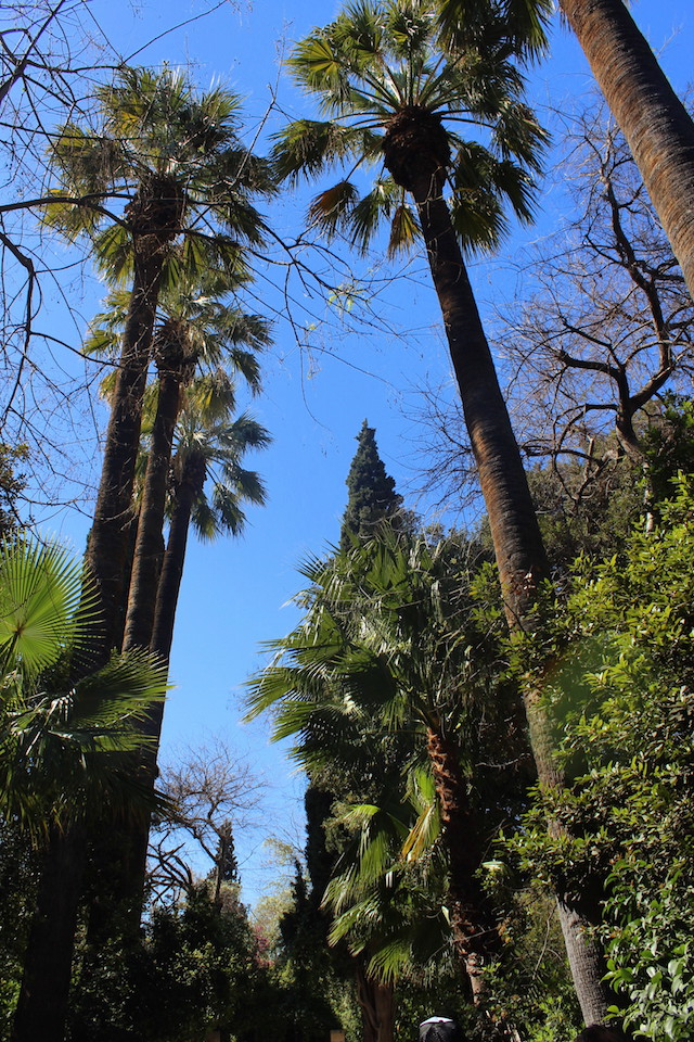 Palm trees in the National gardens in Athens