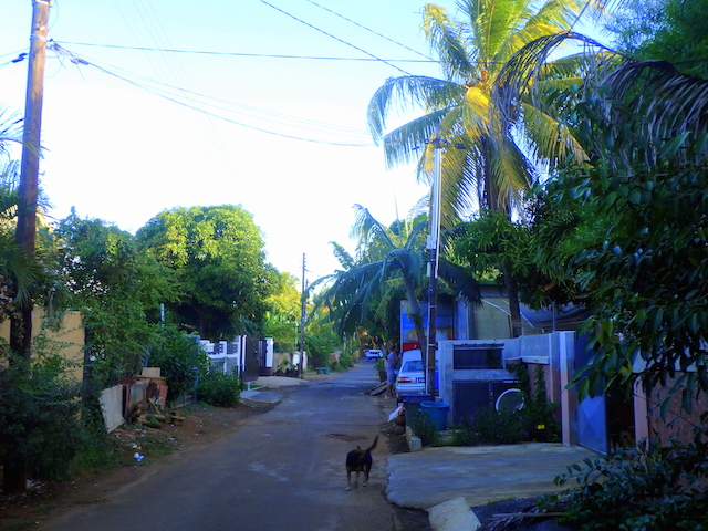 Stray dog in a little town in Mauritius