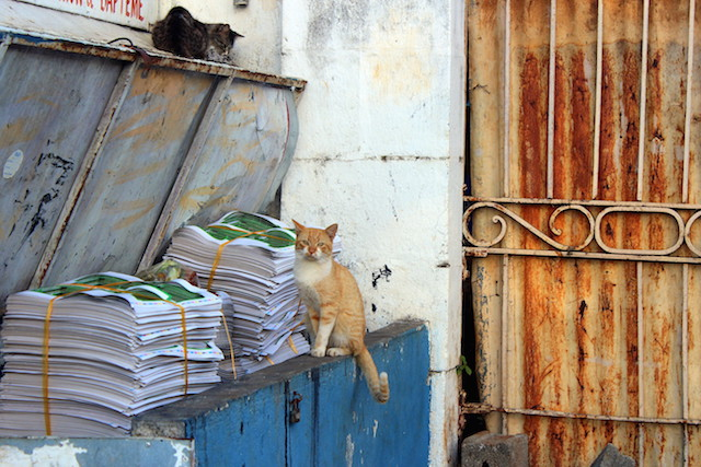 Little cats in Port Louis, Mauritius