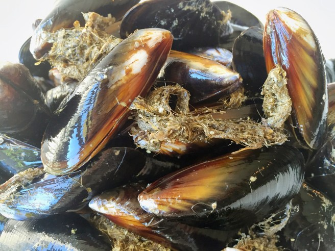 Bearded mussels