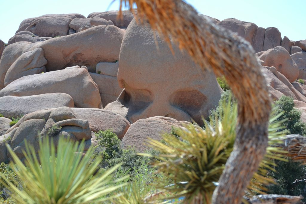 joshua-tree-national-park-climbing-camping-hiking-adventure-tour-skull-rock-2