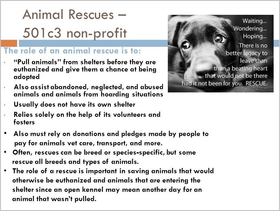 How To Start A 501c3 Animal Rescue