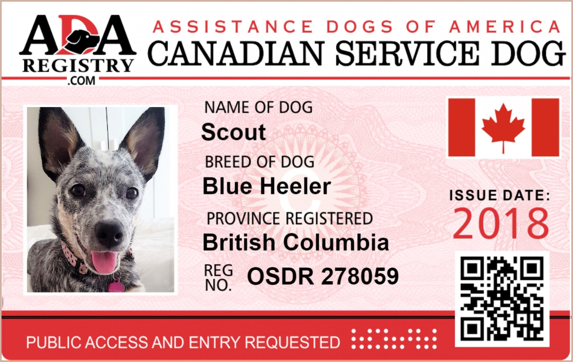 Service Dog Id Card Template