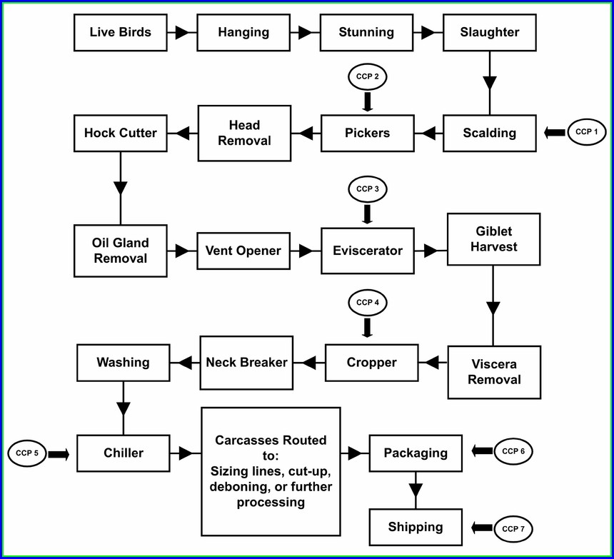 Food Preparation Haccp Flow Chart Template