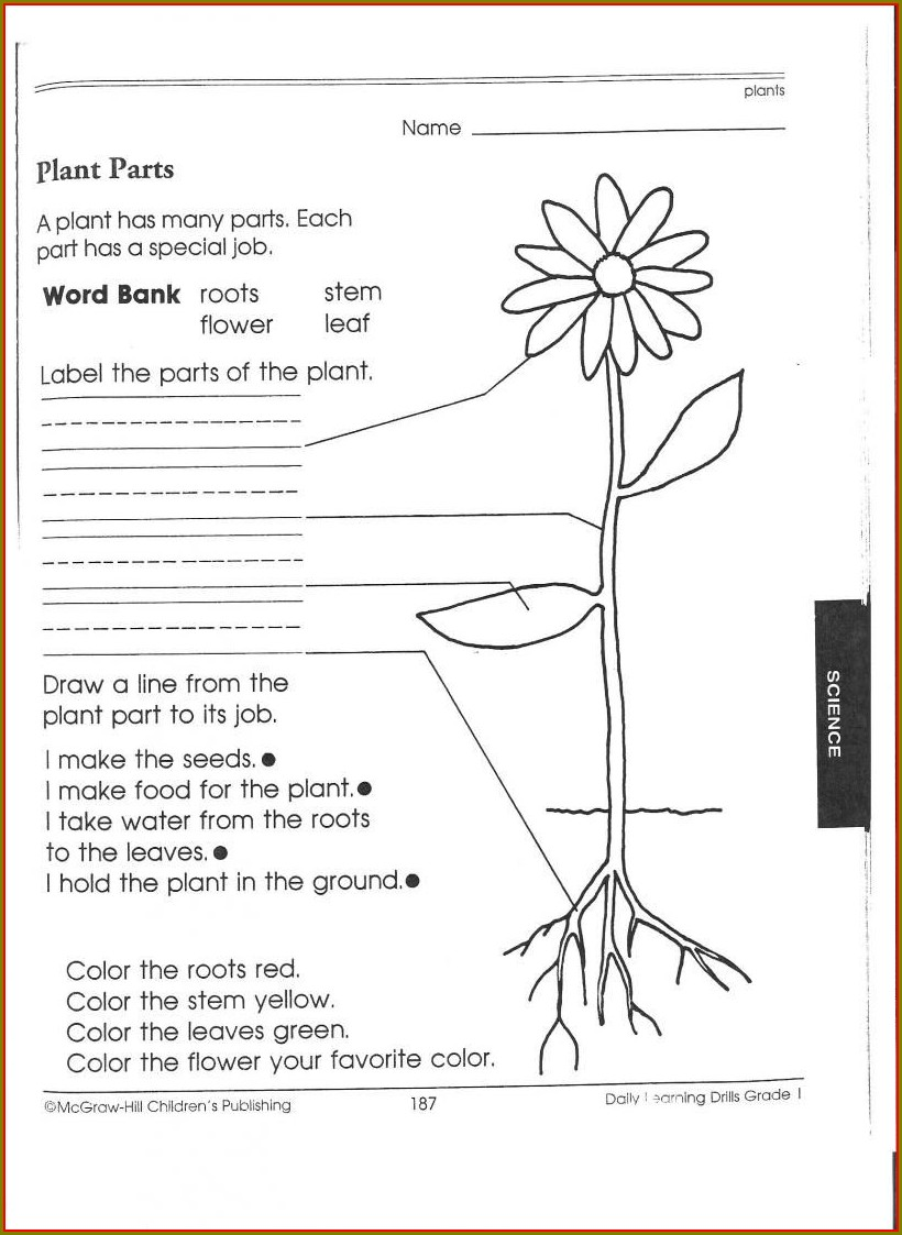 1st Grade First Grade Science Worksheets