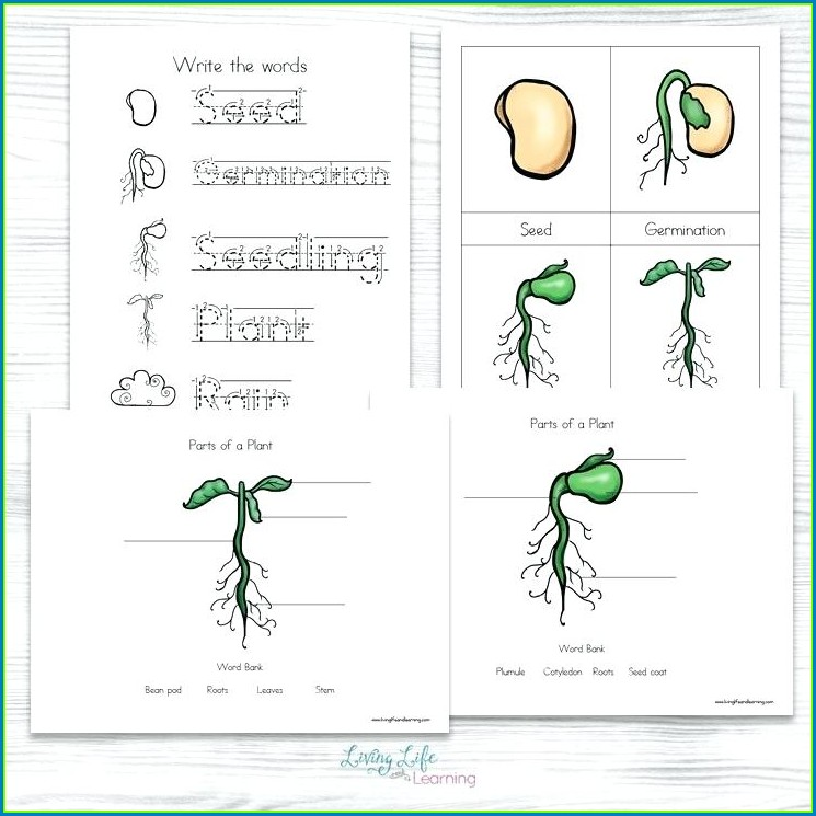 2nd Grade Butterfly Worksheets