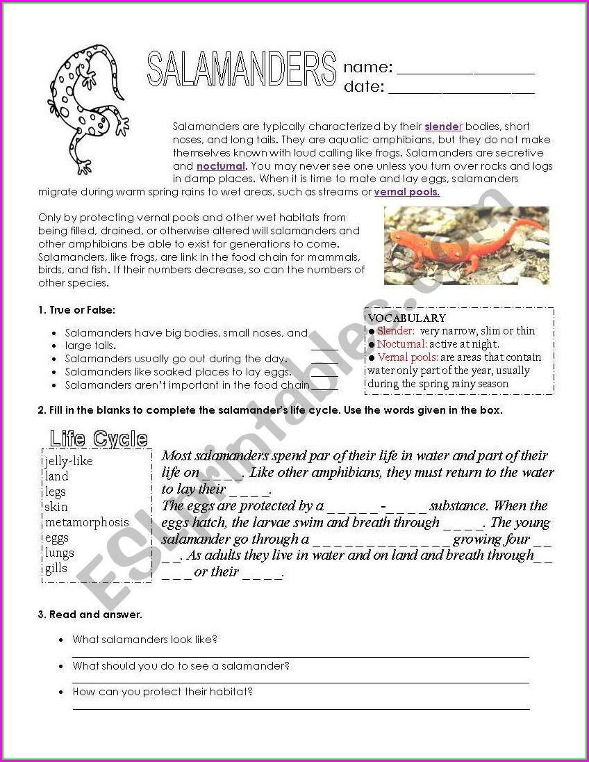 2nd Grade English Worksheet For Kids