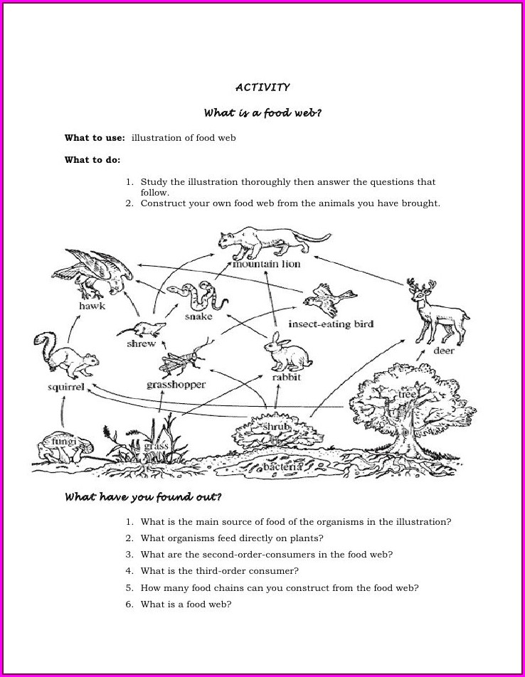 6th Grade Food Web Worksheet Middle School