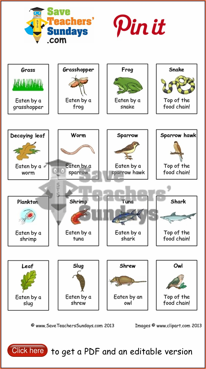 Animals Food Worksheet For Grade 3