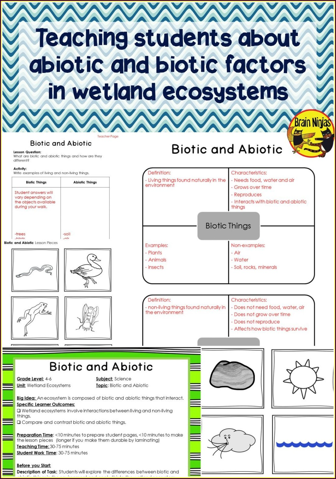 Biology Food Web Worksheet High School