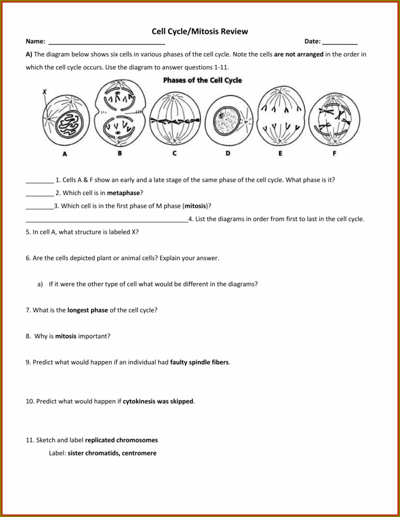 Mitosis Worksheet Cell Cycle Labeling Answer Key Worksheet ...