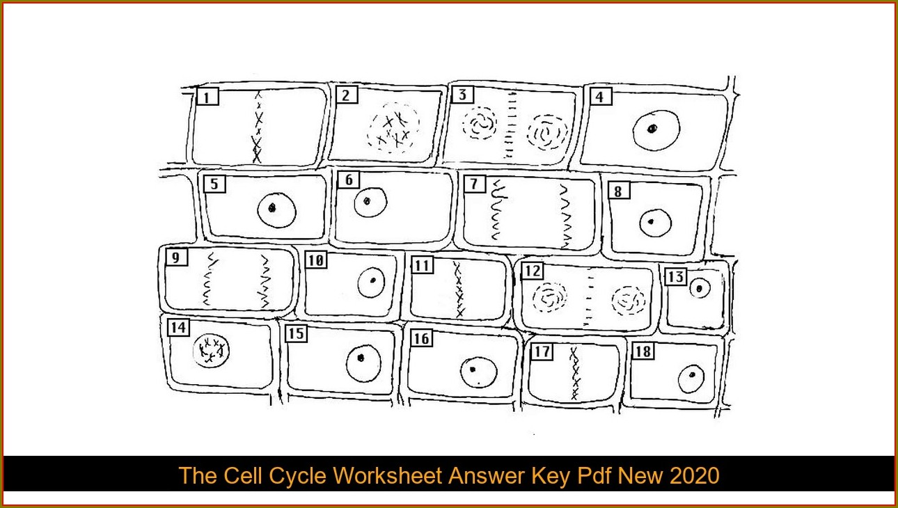 Cell Cycle Worksheet Pdf