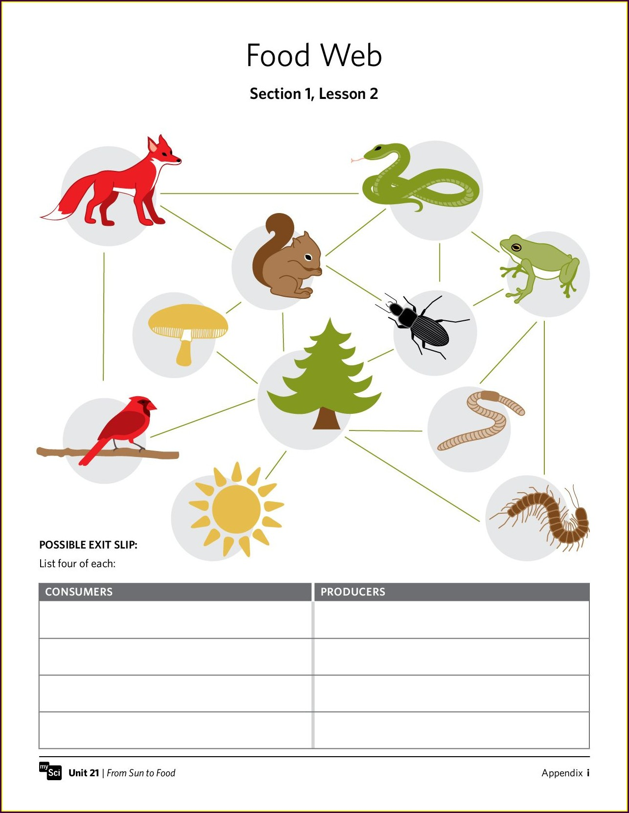 Food Web Worksheet 7th Grade