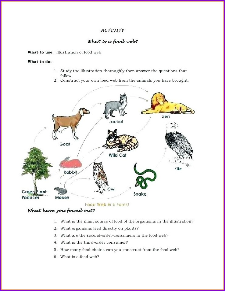 Food Web Worksheet Doc