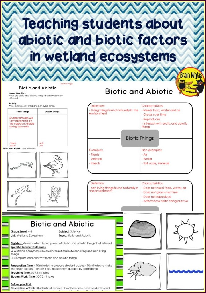Food Web Worksheet High School Pdf